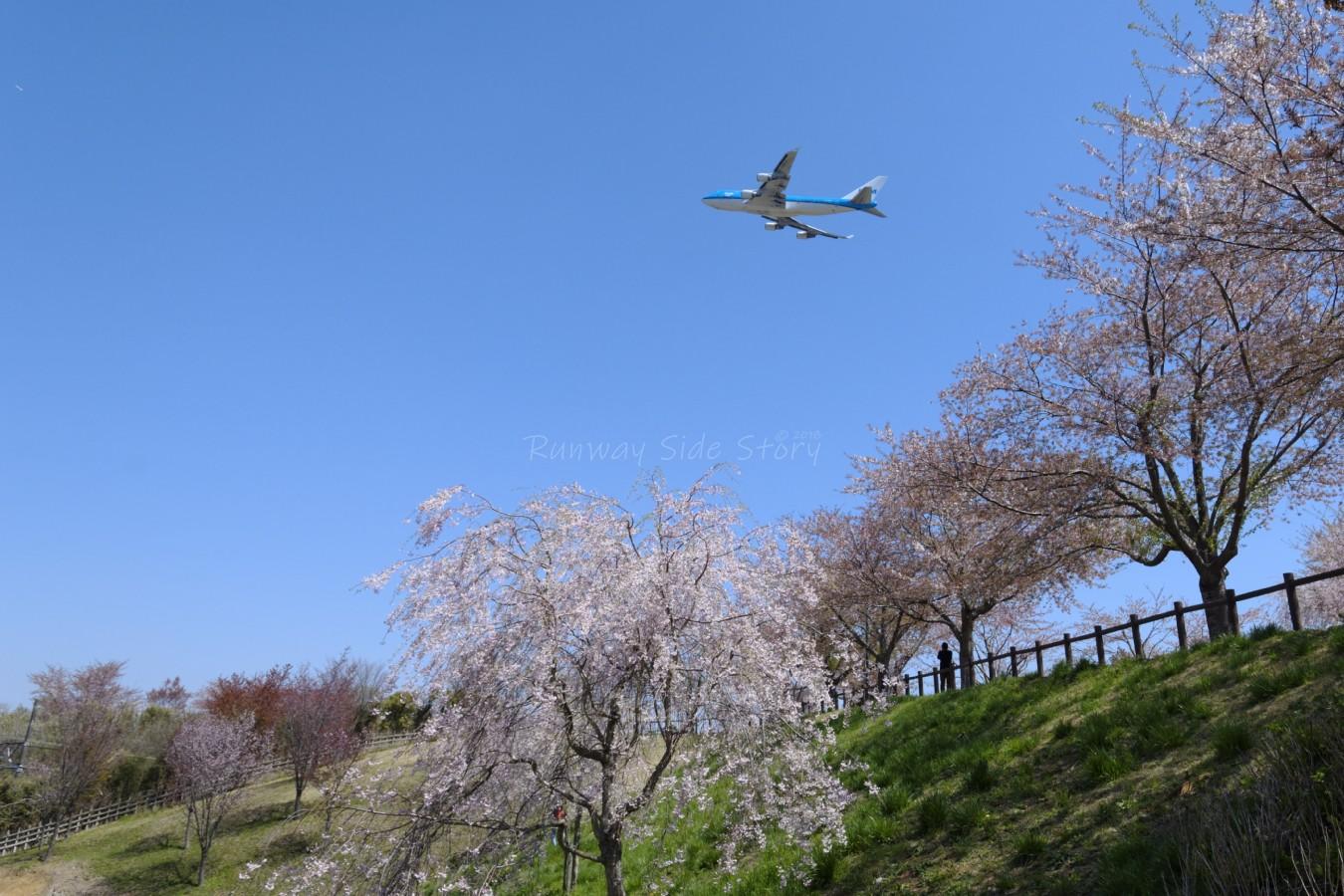 しだれ桜がなびく時